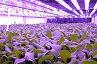 植物照明市场前景看好,各厂商布局现况一览