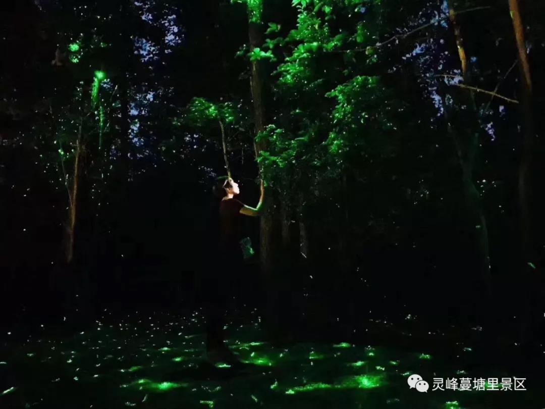 蔓塘里灯光节1.jpg