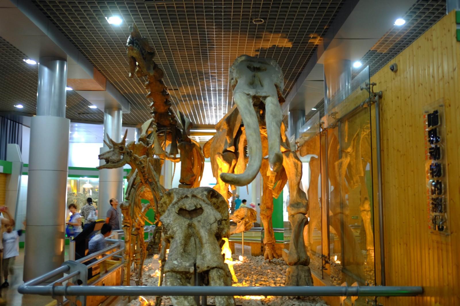 北京自然博物馆.jpg